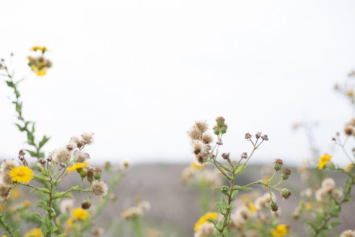 Yellow flowers in the wind - linn memran