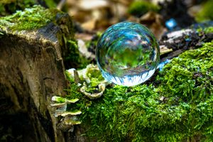 Crystal Ball on a Log
