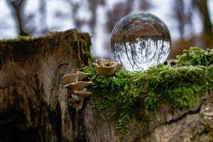 Ball on a Log