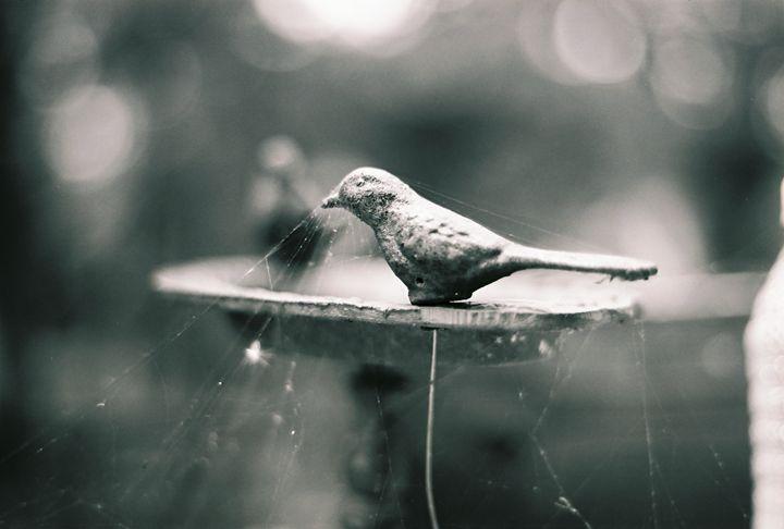 Birdbath forgotten - Josh King Creative