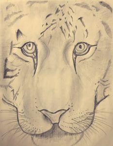 Pencil tiger