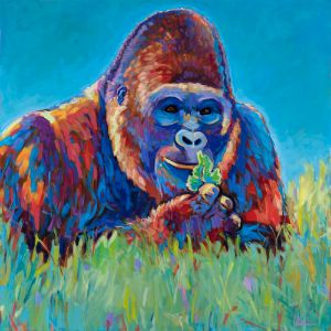 Gorilla—Available