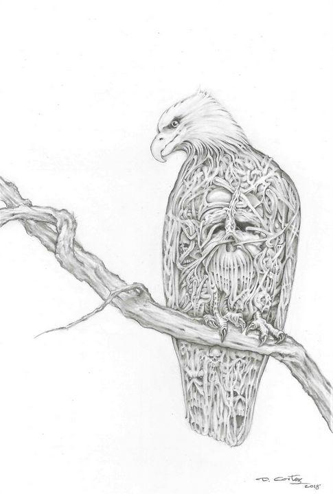 eagle skulls - d.cortez