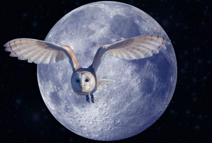 Night flight - suzydoodle