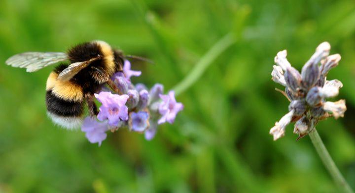 buzzin - suzydoodle