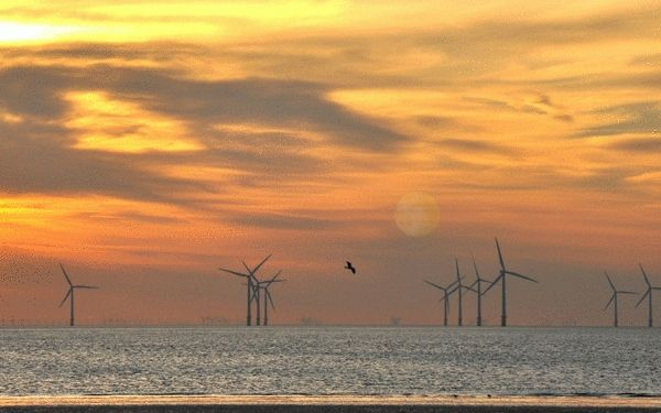 the windfarm - suzydoodle