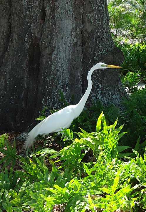 EGRET ON THE PROWL - Marshalsea Graphic Design
