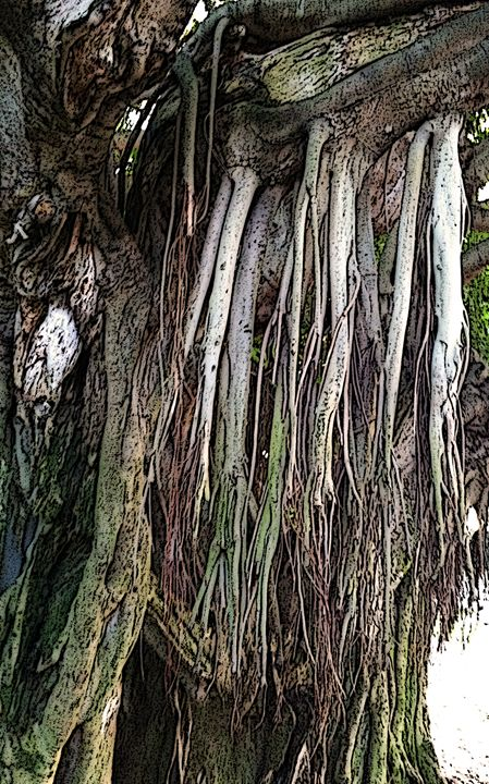 HANGING BANYAN ROOTS - Marshalsea Graphic Design