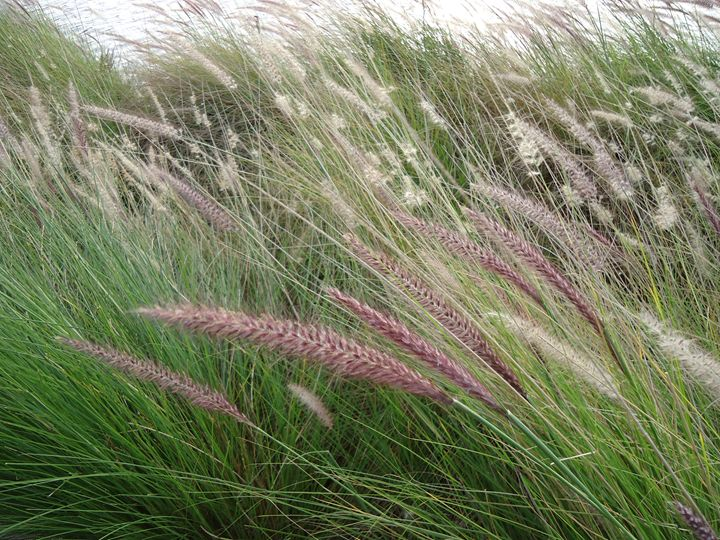 RIVER GRASS - Marshalsea Graphic Design