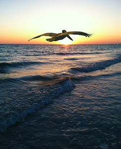 PELICAN SUNSET