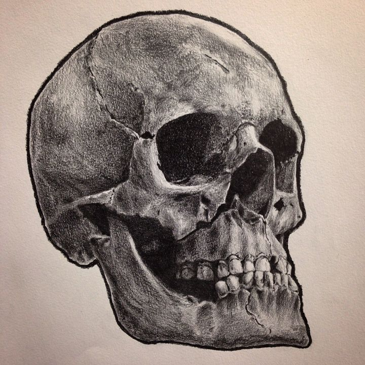 Realistic Human Skull - NassyArt