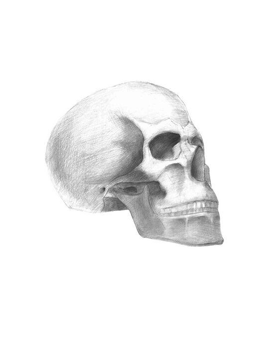 Skull - Lorelei