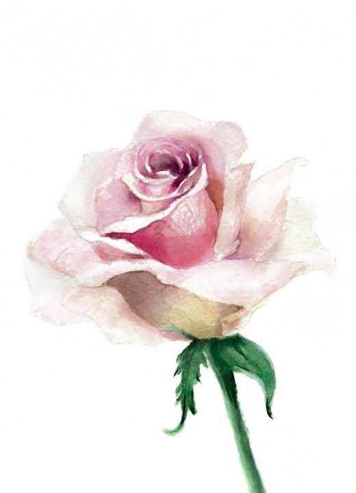 Rose flower - Lorelei