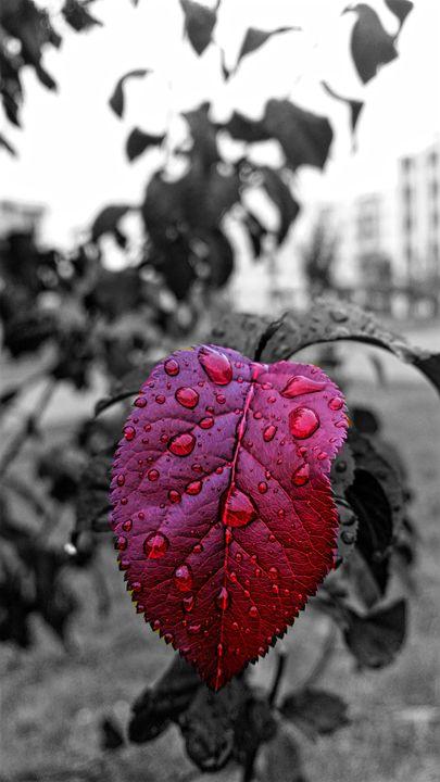 Purples Autumn - ARDIT QERIQI PHOTOGRAPHY