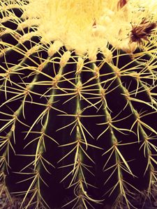 Cactus in the Valley II
