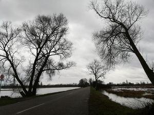 Landscape ried alsace
