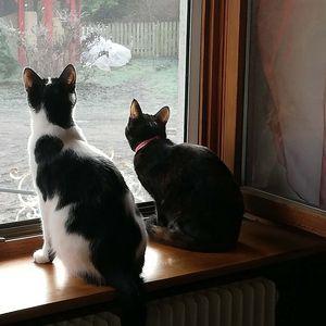 Les chats, toute une storie!