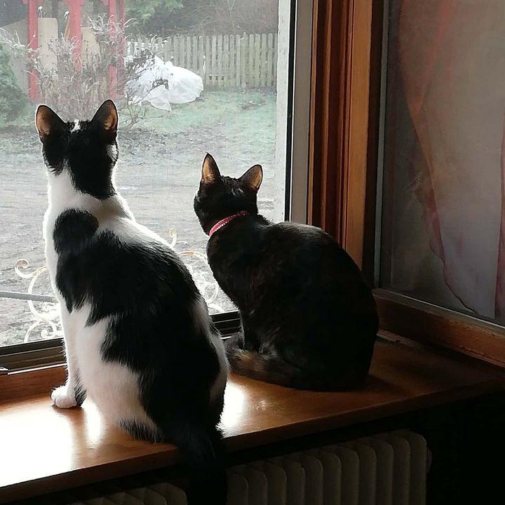 Les chats, toute une storie! - art-nathacha