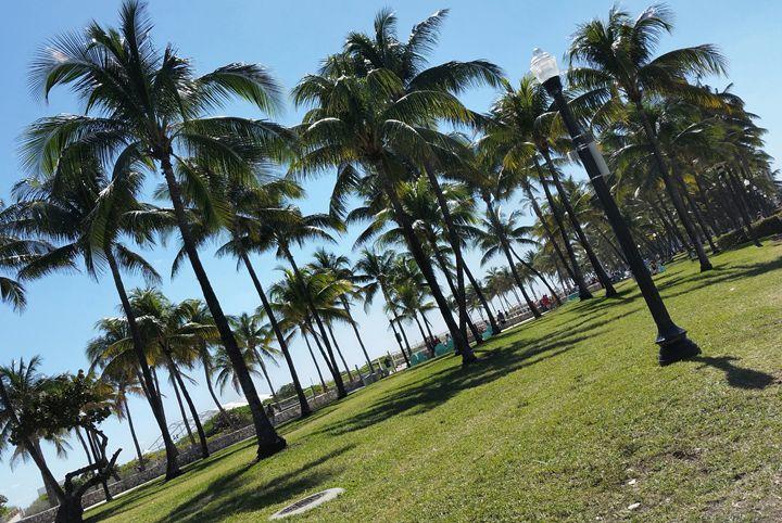 Palm trees on Miami Beach - South Beach, Miami Art