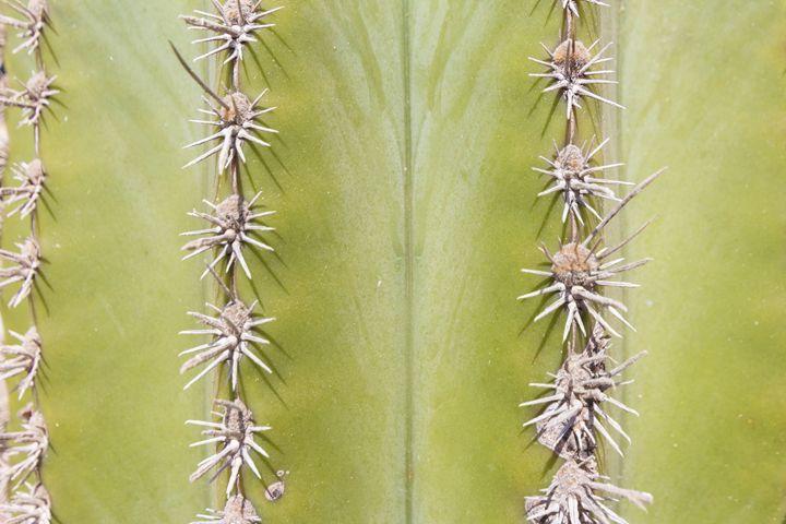 Green Cactus closeup - nature macro - hanoh iki
