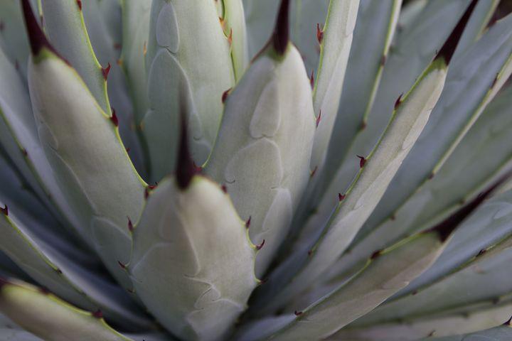 beautiful cactus plant macro - natur - hanoh iki