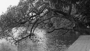 Trees Vietnam