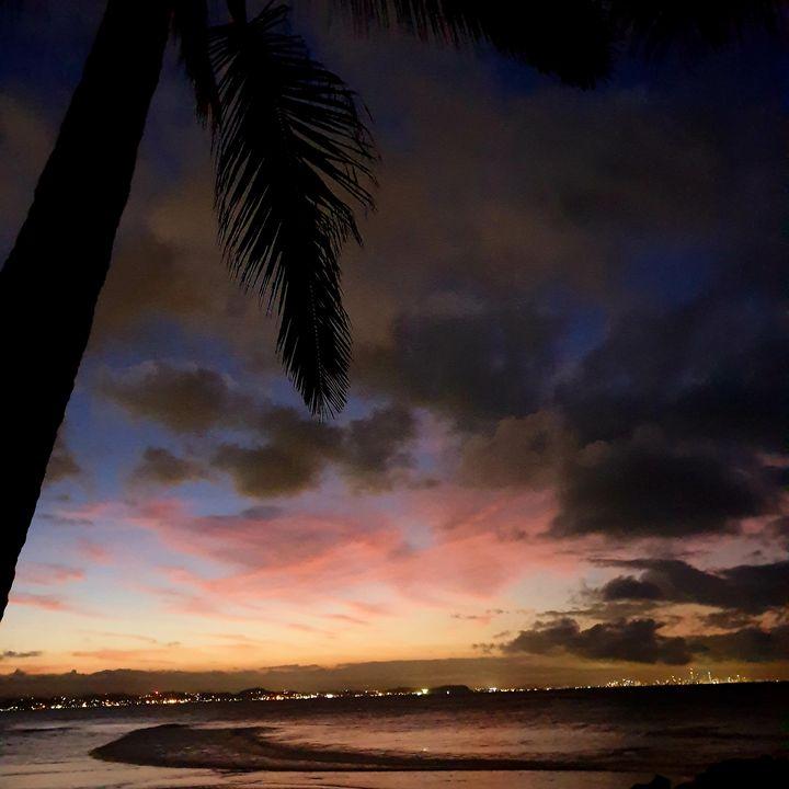 Palm Tree over the Gold Coast - Natz Art and Design