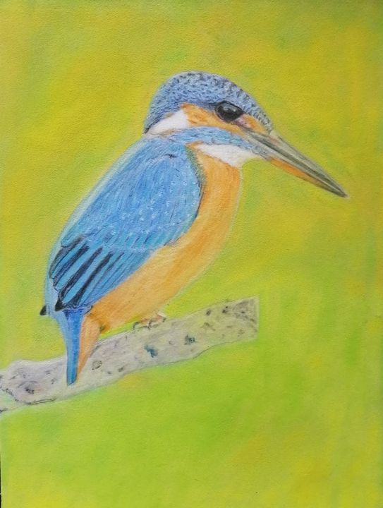 Kingfisher sitting on tree - Chrisfineart