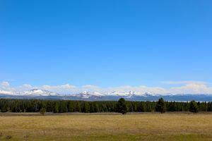 Yellowstone Tree Line