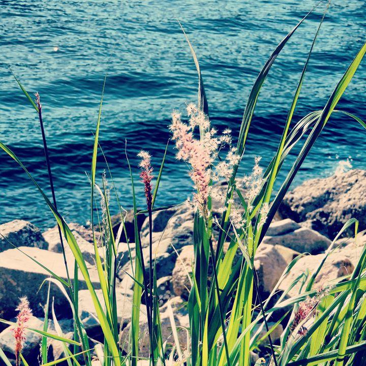 Wild Plants - Jessica Lee