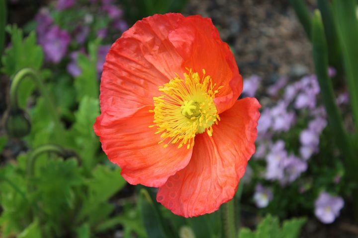 Poppy - WidowMaker