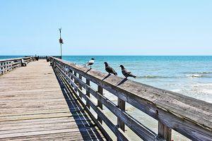 Three Birds and a Pier