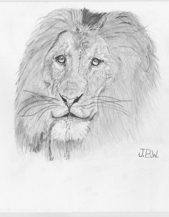African Lion - Justin