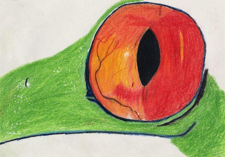 Red Eye Tree Frog - Justin