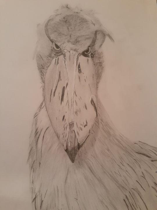 Shoebill Stork - Justin