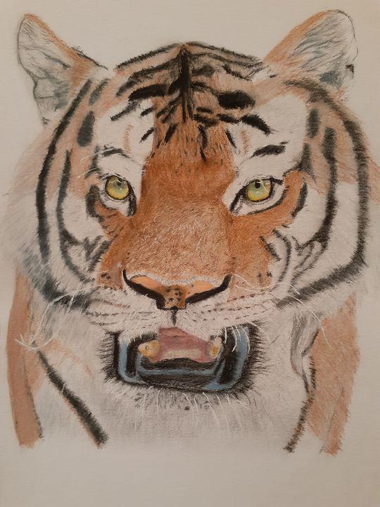 The Tiger - Justin