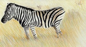 Zebra Drawing