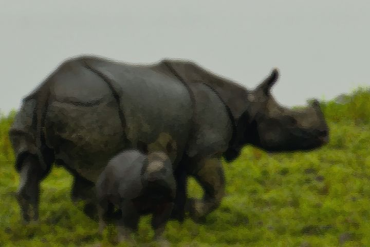 Great Indian One Horned Rhino - Entertainment