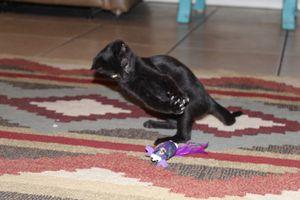 Kitty playing