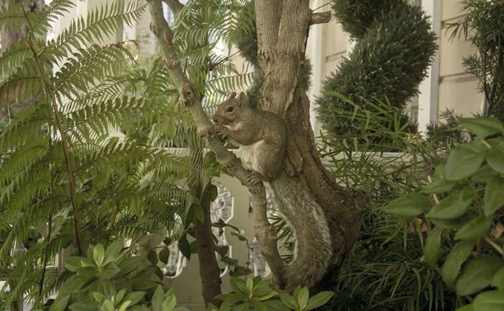Squirrel - Empty Cup Gallery