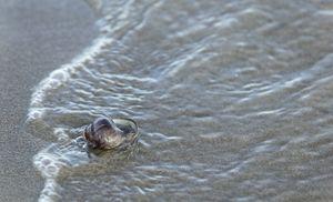Solitude Shell