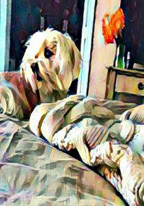 Lazy Dog Days