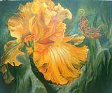 Butterfly on Iris flower