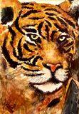 Magestic tiger