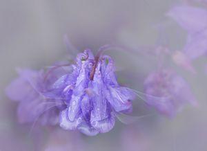 Veils in Purple