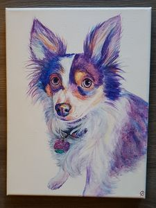 Rainbow Dog Portrait