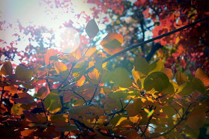Fall Shines Through - Donovan Morgan