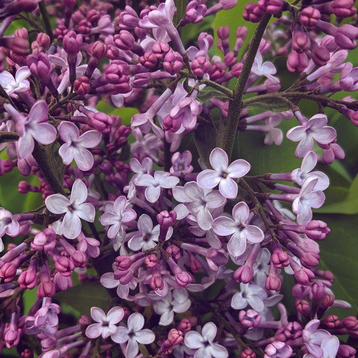 Purpleness - Donovan Morgan