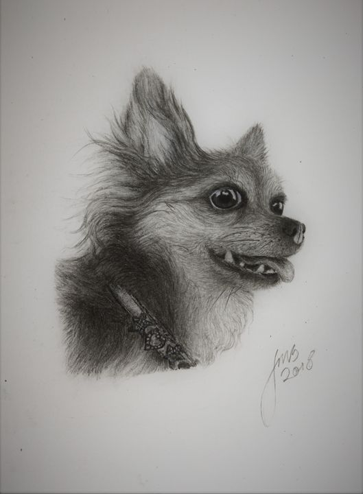 DOG Realistic Drawing - JMS Studio