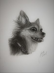 DOG Realistic Drawing